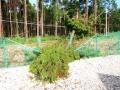 【千葉の太陽光被災・その1】倒木が電柱を折り、フェンスも壊す