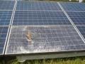 【千葉の太陽光被災・その2】まるで「やり投げ」、飛んできた屋根材が太陽光パネルを突き破る
