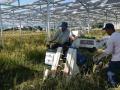 台風による「全倒壊」乗り越えて稲刈り、小田原の営農型太陽光