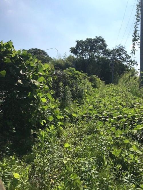 図1●まるで「ラピュタ」。深い森のようで、太陽光発電所があるようには見えない