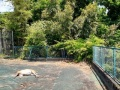 「太陽光発電所内でシカが死亡」、フェンスを飛び越えて侵入