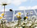 「草花に囲まれた」メガソーラー、周辺農家と共存共栄