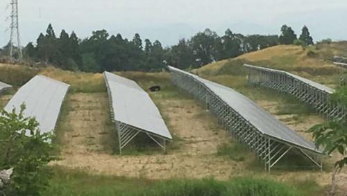 図1●太陽光発電所内に侵入した2頭のクマ