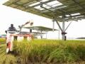 コメ農家が導入した、2軸追尾型の営農型太陽光