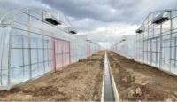 熱水ハウスをIoT次世代施設園芸へと転換