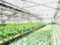 太陽光と蓄電池で「地域密着型ICT農場」、茅ケ崎市で