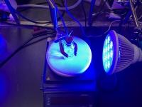 人工光合成実験の様子