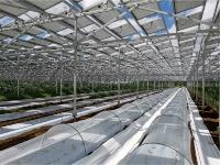 ソーラーシェアリング(営農型太陽光発電所)の例