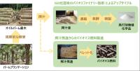 オイルパーム廃木からの複合生産の概要