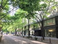 街路樹のイメージ