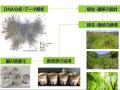 太陽光発電所敷地の「生態系リデザイン」事業、植生を回復