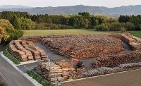 木質チップの原料となる未利用木材
