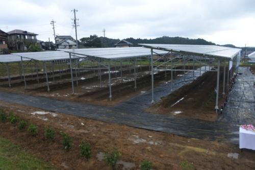 図1●三重県津市安濃町に竣工したソーラーシェアリング(営農型太陽光発電所)