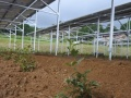 業界初、「農福連携・営農型太陽光」竣工、障害者に雇用の場