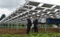 Firms Grow Garlic Under Solar Panels in Chiba