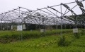 'Solar Sharing' Employed to Revitalize Agriculture in Fukushima (1)
