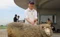 Number of Sheep Increased to Boost Weeding Efficiency at Solar Plant
