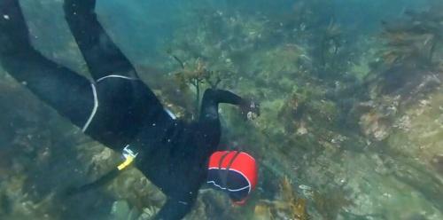 VR映像の一部。海中での海女漁の様子を臨場感豊かに視聴できる。見る向きを変えると、映像も変化する