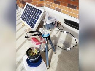 ハエトリソウが虫を捕食する瞬間を激写! ベランダに設置した太陽光パネルで給電