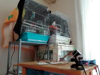 我が家の鳥たち監視システム「チュン監カメラ」