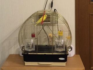 鳥かごを監視して声掛けもできる、深層学習で写真から行動パターンを記録